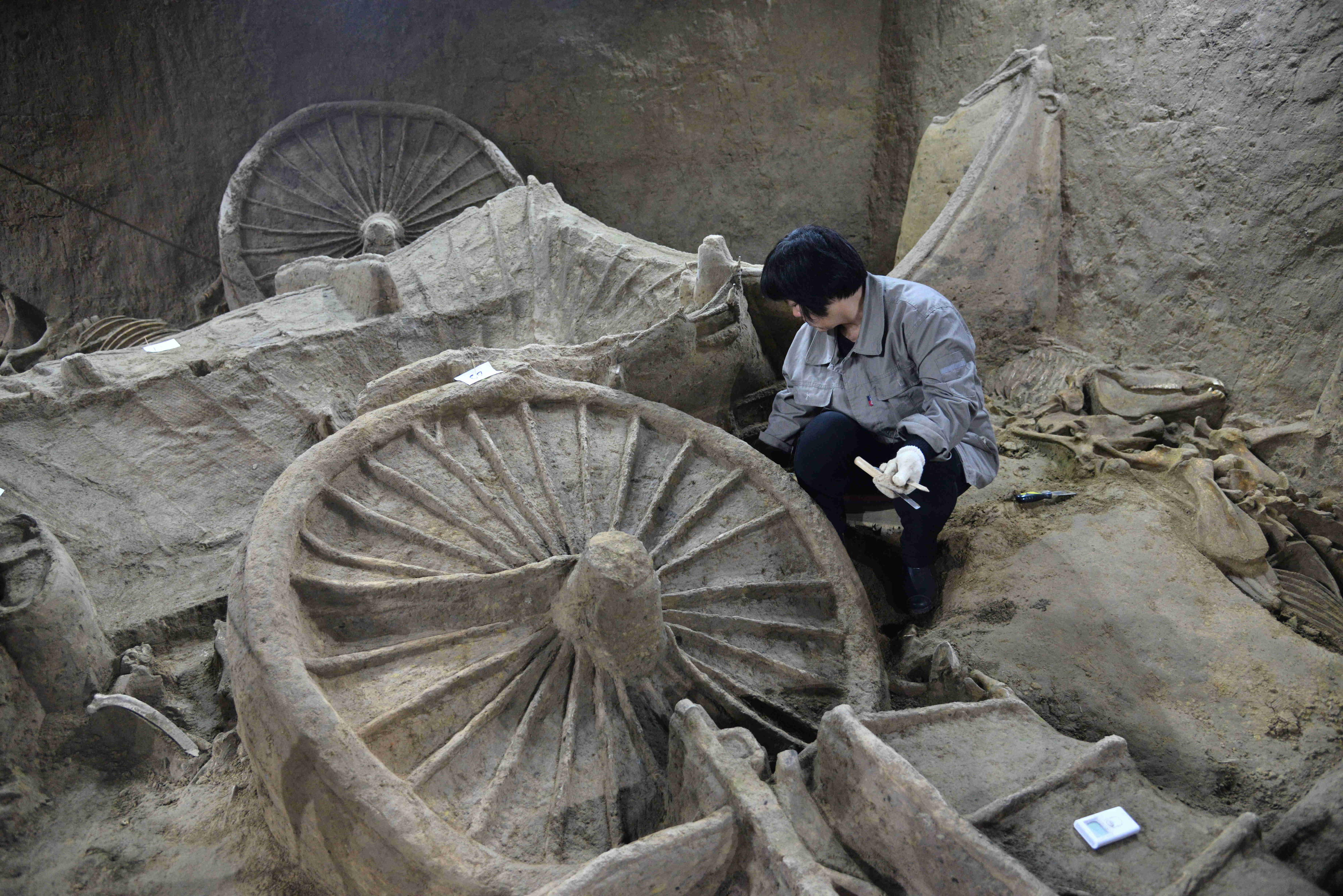 Dig unveils ancient chariots and horse skeletons