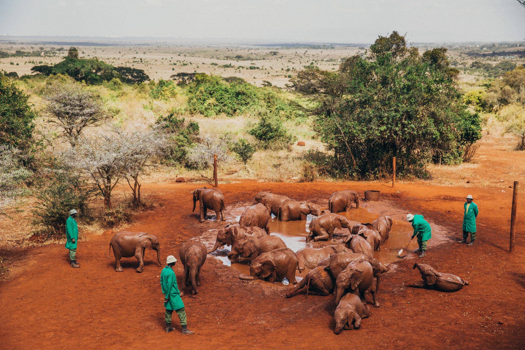Elephants and their keepers