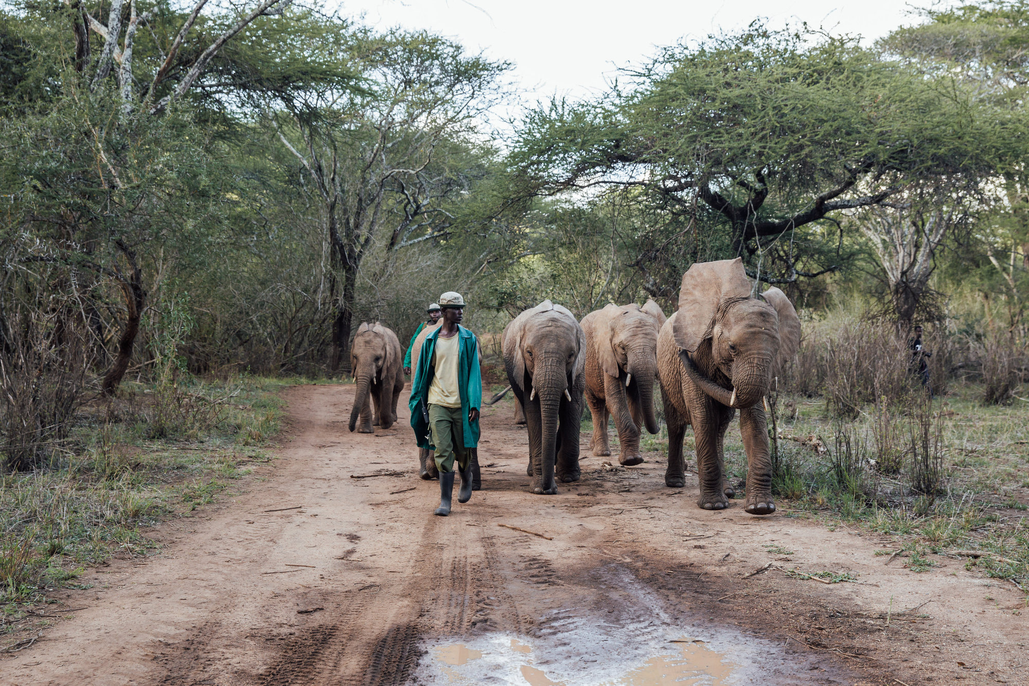 Elephants exercise with their keepers