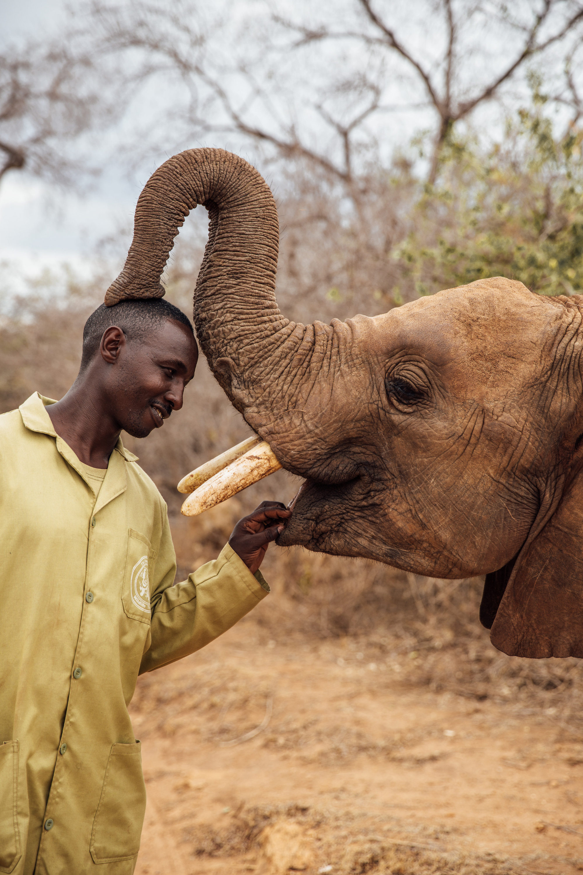 Keeper with a playful young elephant