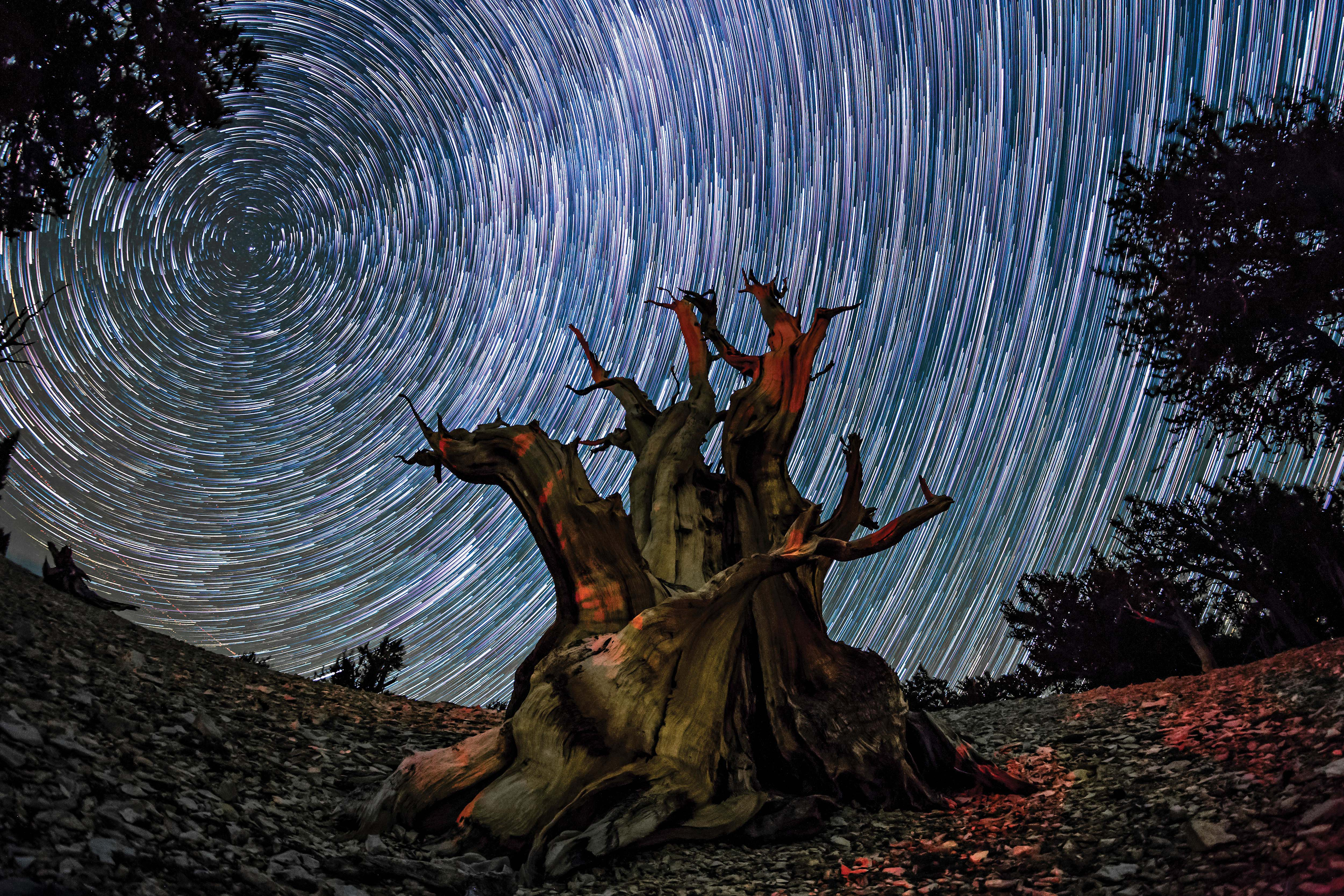 A long exposure shot taken at Ancient Bristlecone Pine Forest in California.