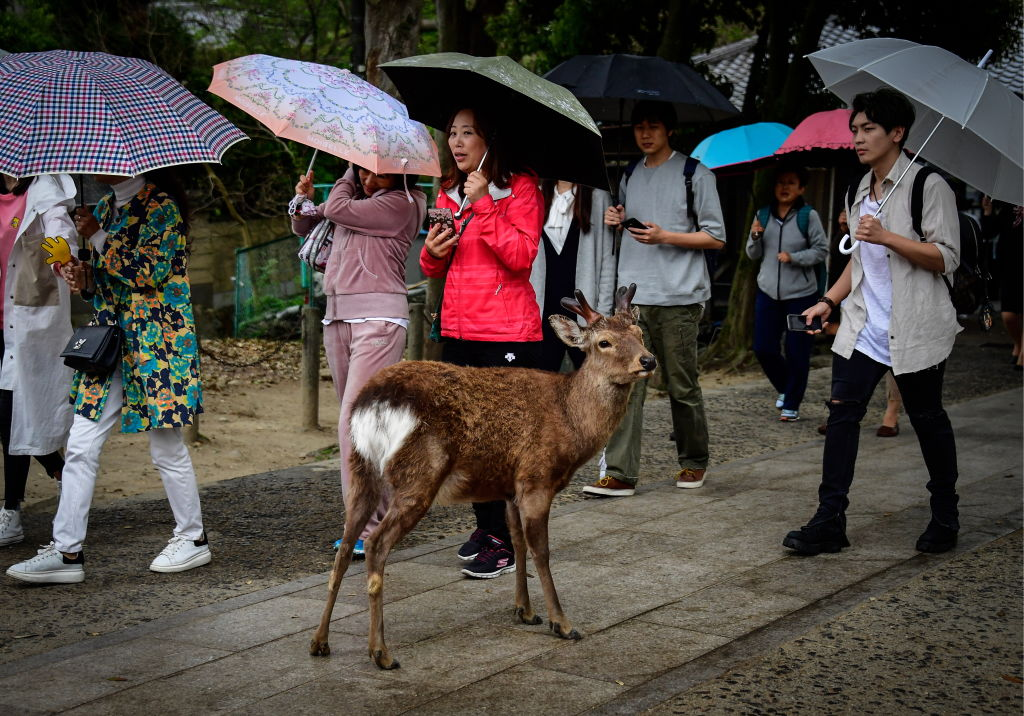 Problems have occurred over the last few years due to rising deer populations in regions across Japan.