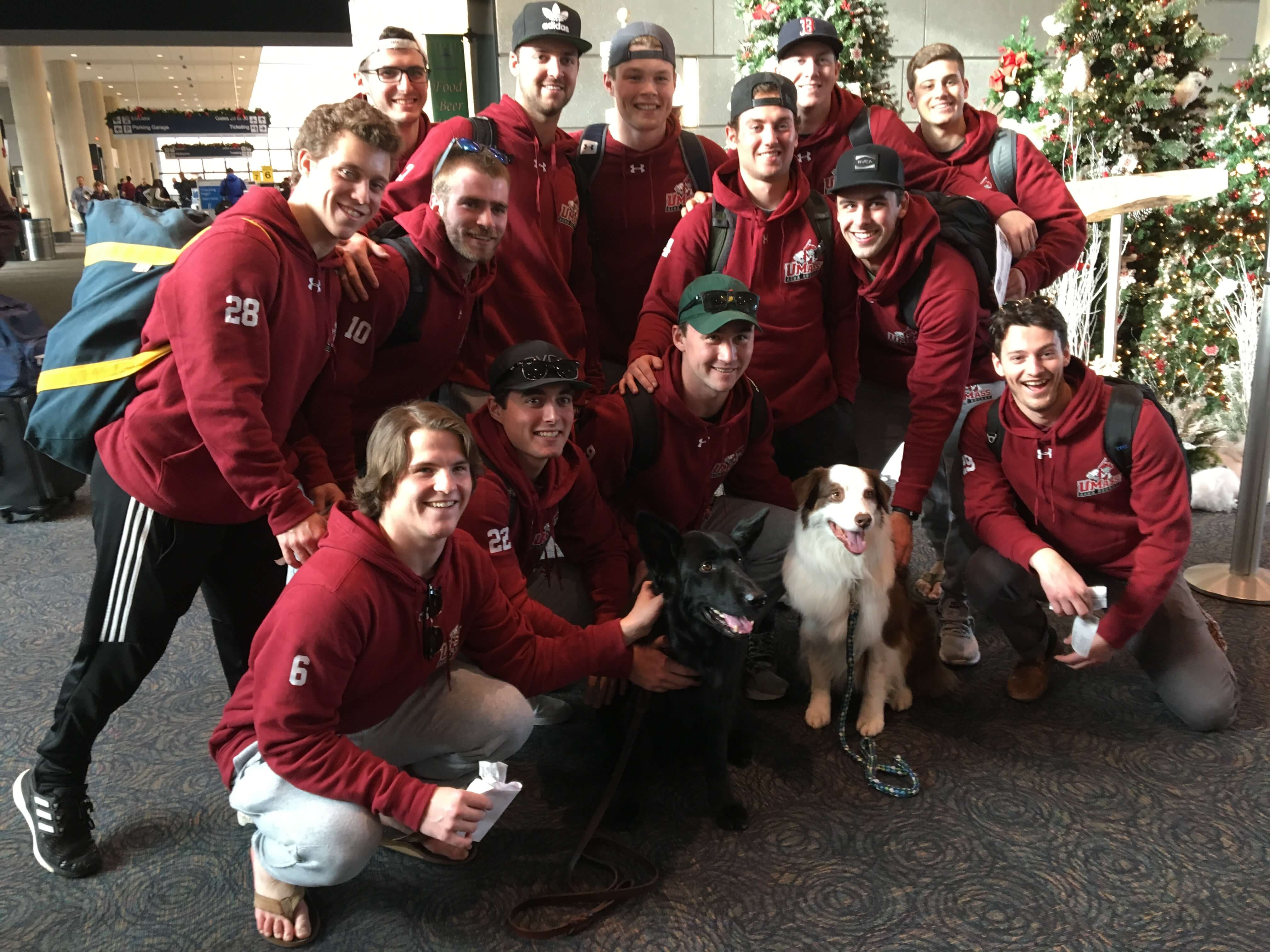 Therapy-dogs-bradley-airport