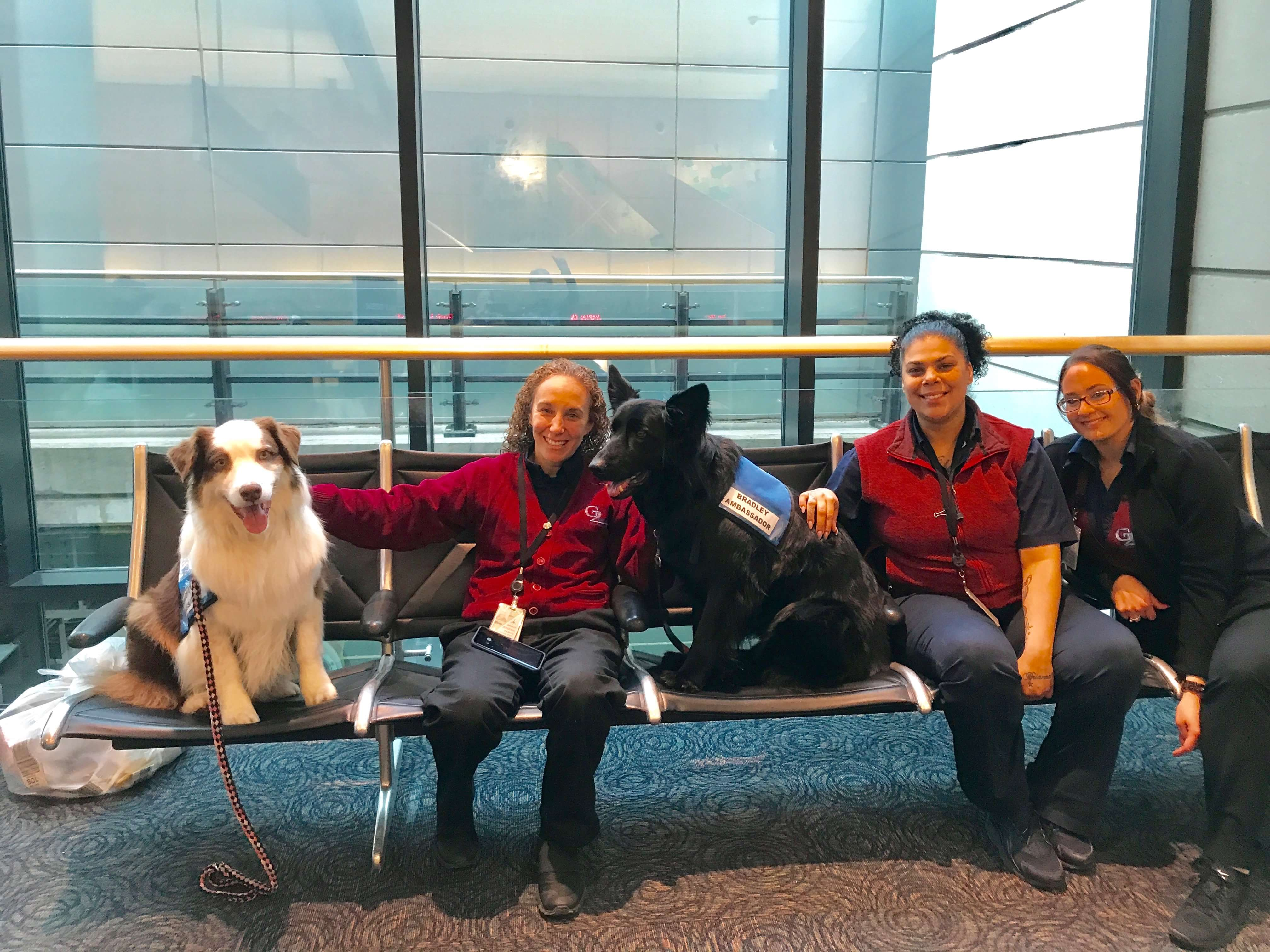 Calm-therapy-dogs-airport