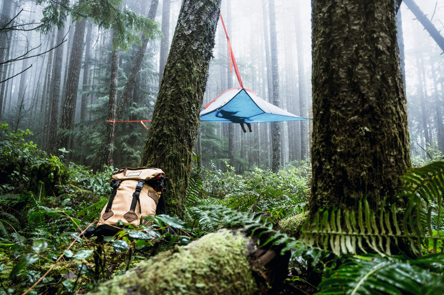 Tentsile Tree Tents in England.