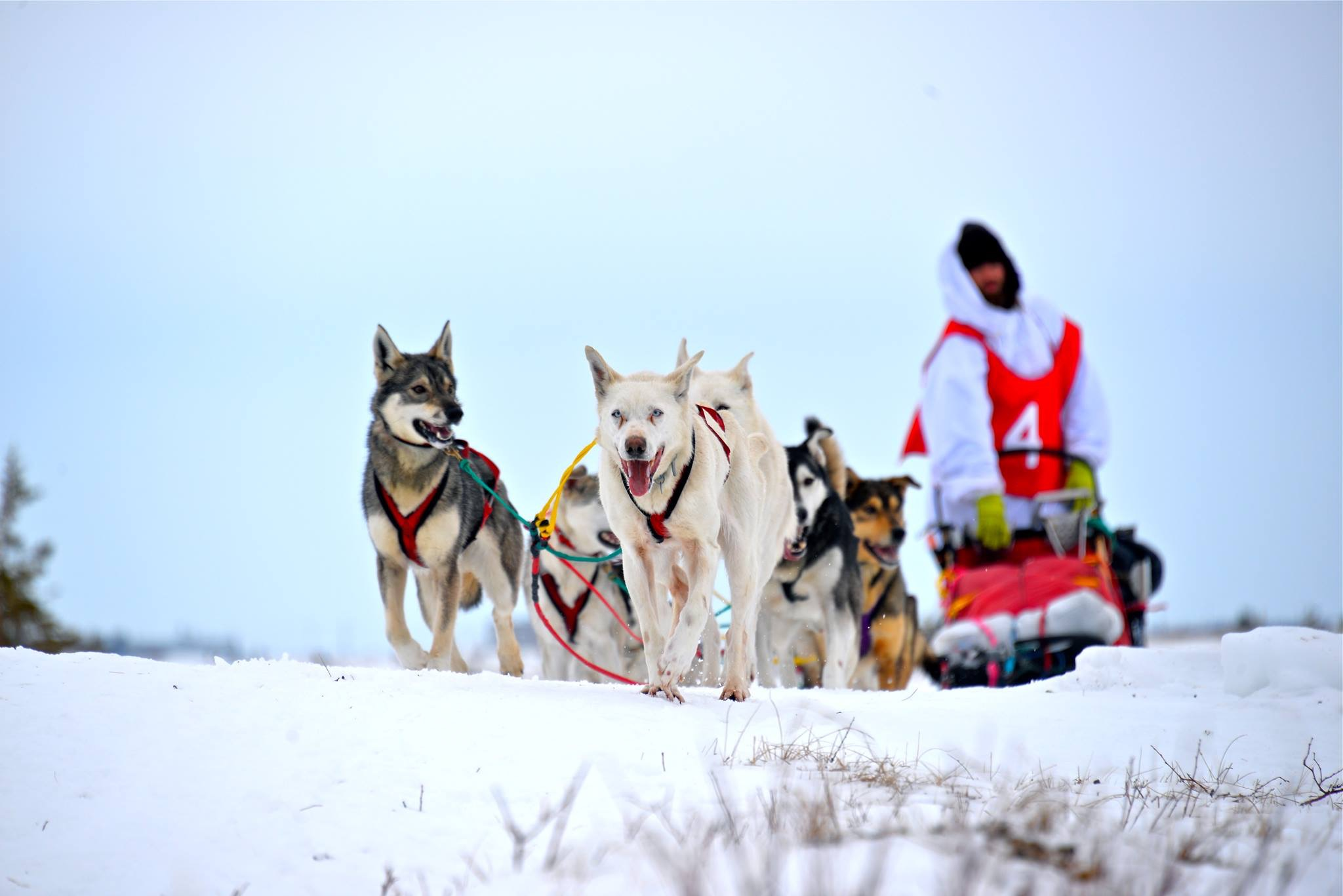 Justin Allen has spent the past five years learning the art of dogsledding from an indigenous teacher.