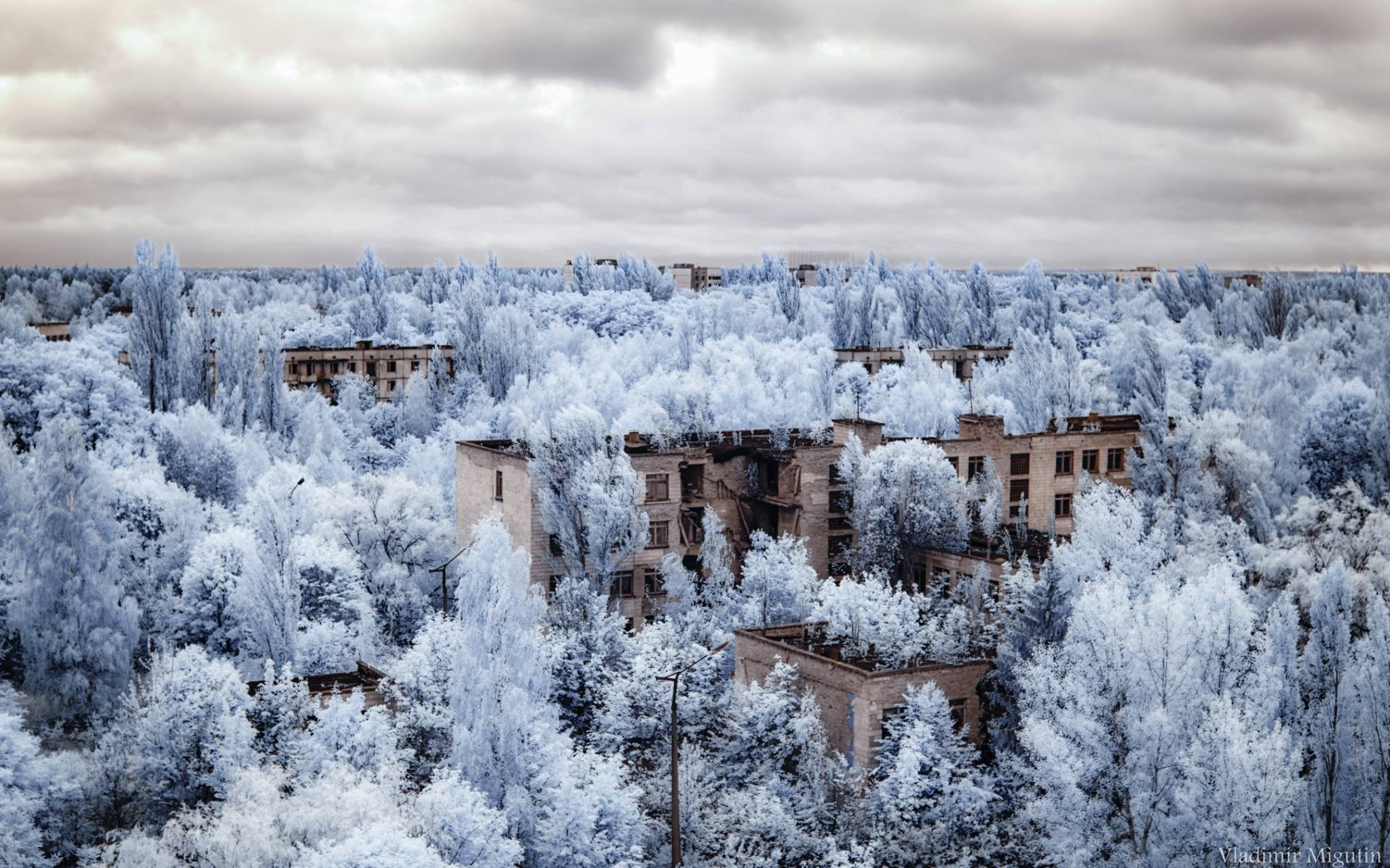 Chernobyl foliage captures in infrared