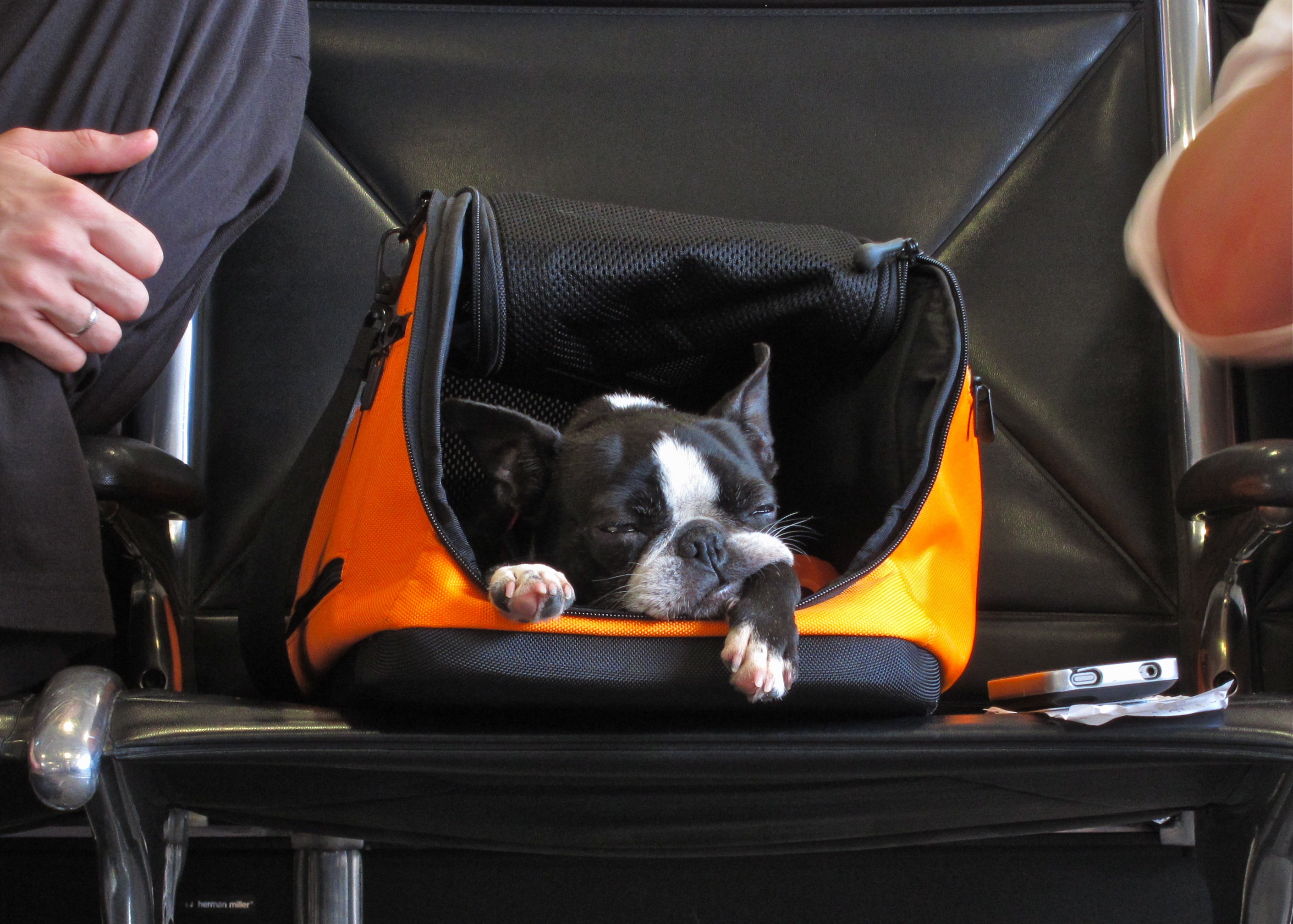 Dog waits in its carry-on container at airport in Atlanta, Georgia.