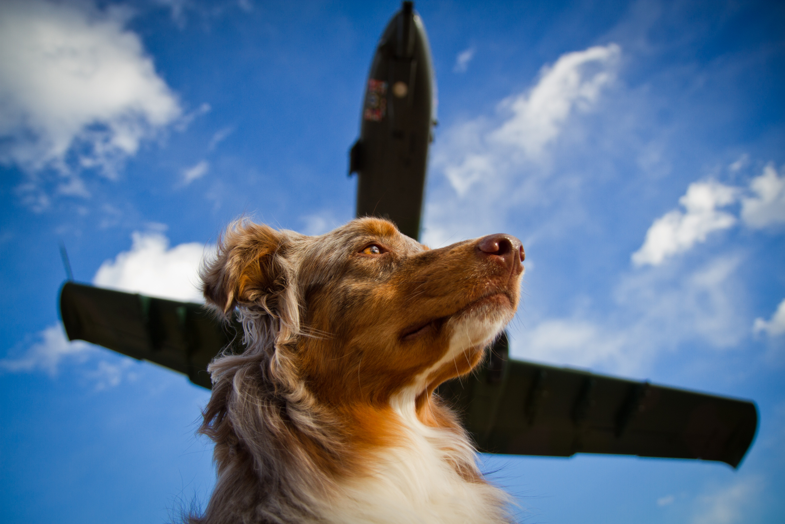 Dog with Plane