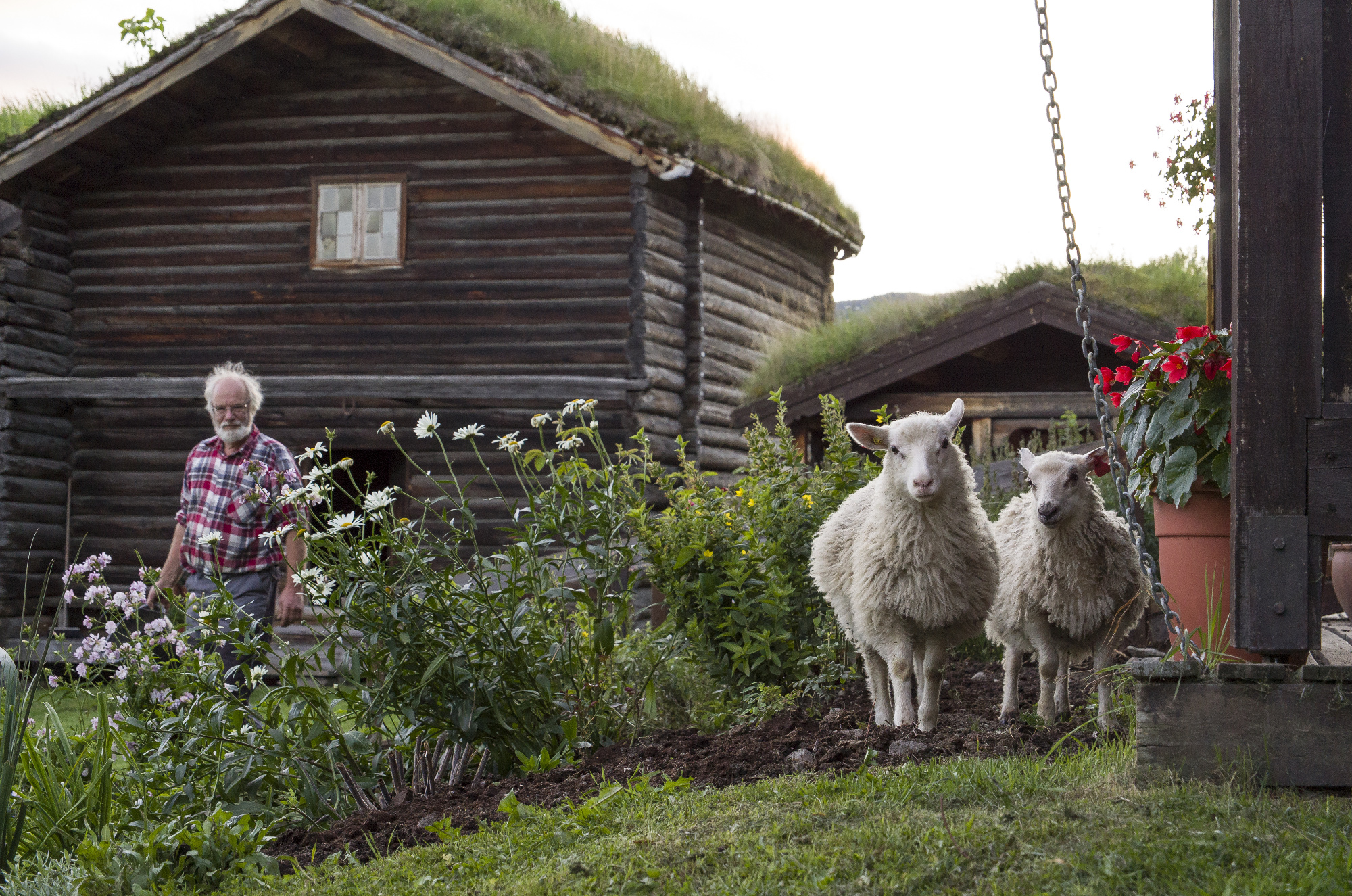 Nordigard Blessom is also a functioning sheep farm.
