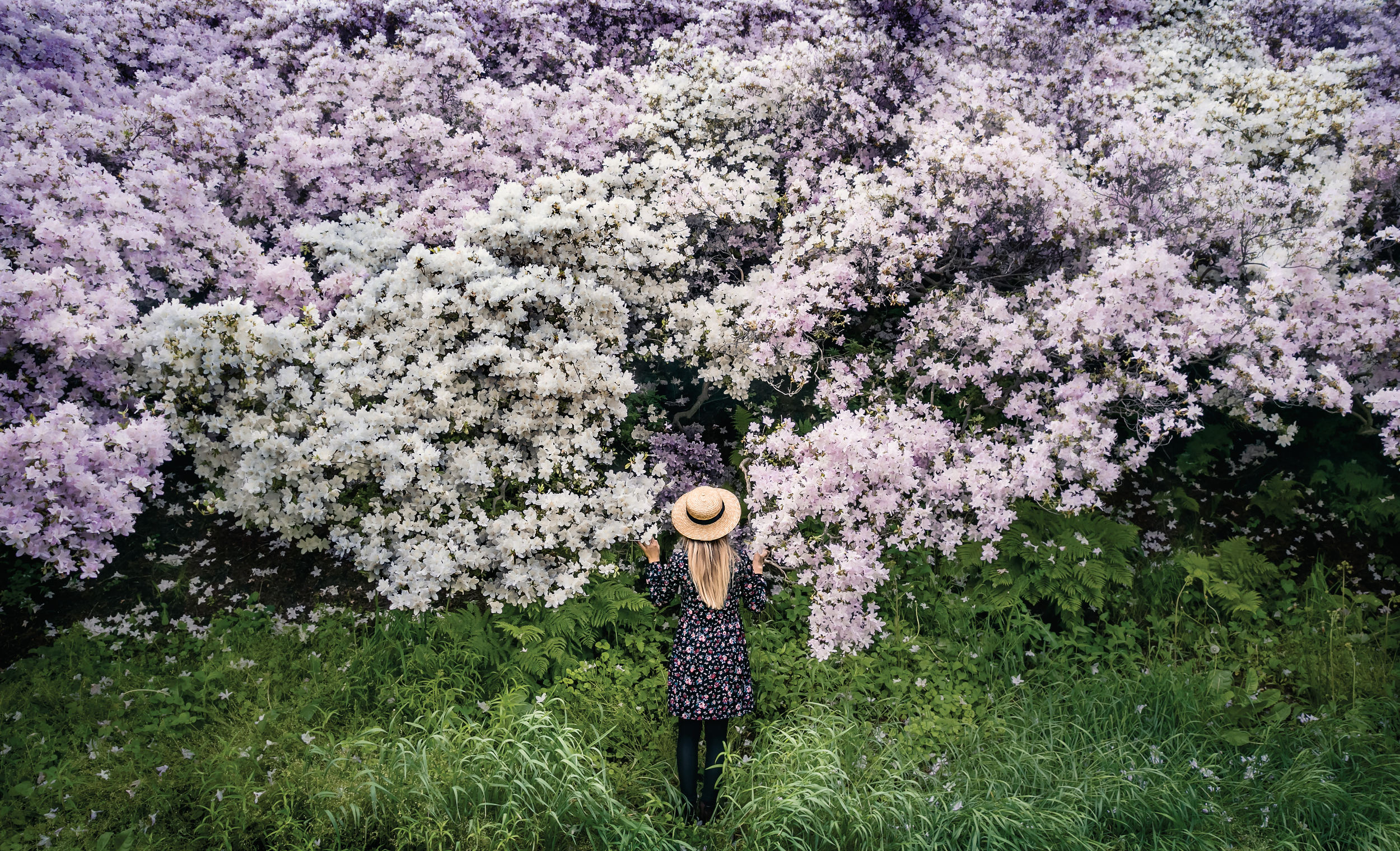 A girl with cherry blossoms in Japan